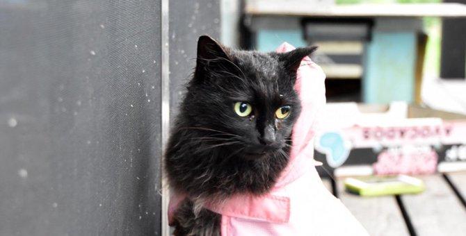 我が家にやって来た不思議な黒猫「クロちゃん」