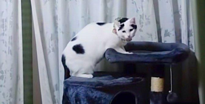 コロナ禍で失業の飼い主さん…飼えなくなった猫7匹の行方は?No.2