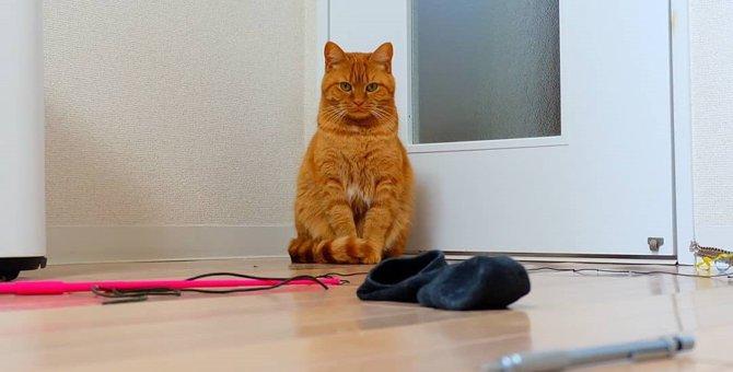 『さぁ、好きに選べ』おもちゃを並べて催促する茶トラ猫さん♡