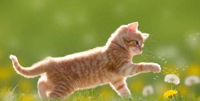 猫のトリコモナス症とは?症状や人にうつる確率、治療と予防の方法