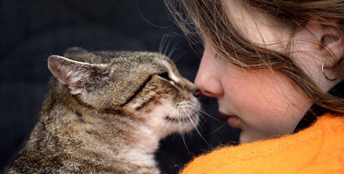 猫に死期が近づいたときに見られるサイン5つ