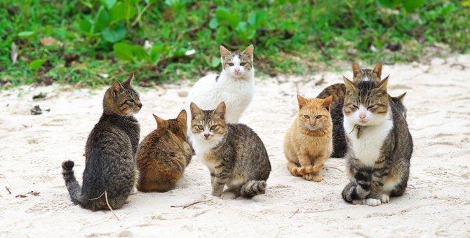 猫が縄張りを作る2つの理由とその意識