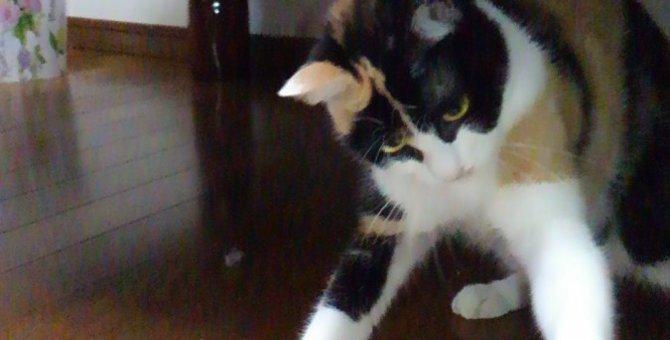 猫にひっかかれたり、噛まれたら?2つの人獣共通感染症と予防、対策の方法