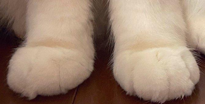 マシュマロ?小籠包?キュートな猫足が何に見える?と話題に!あなたの見解は!?
