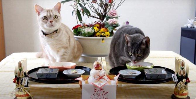 手作りおせちに舌鼓♡ご馳走を食べる猫ちゃんたち