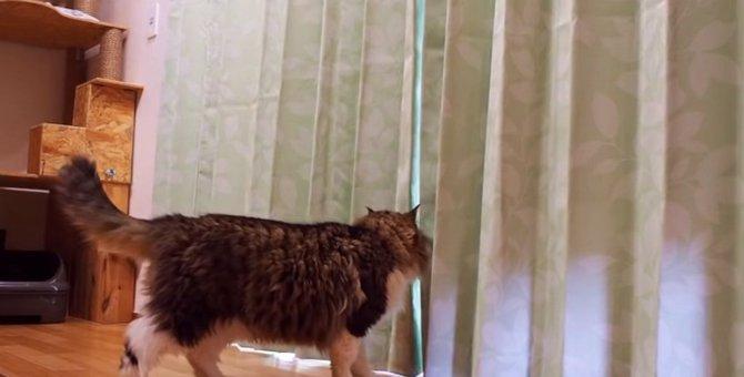お部屋のカーテンを変えて模様替え!猫の反応は?