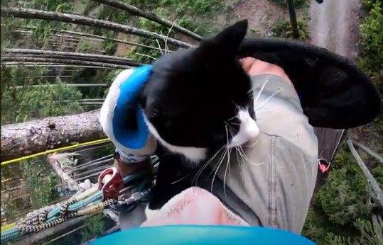 猫が目も眩む高さの木で鳴き叫ぶ…落下の危険を乗り越え救助!
