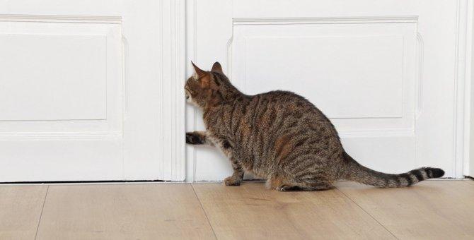 要注意!猫が脱走しやすい時と場所5つ
