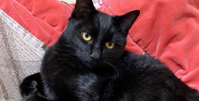 黒猫さんにセカンドハウスの事を聞いてみた!|LAYLAのペットリーディング