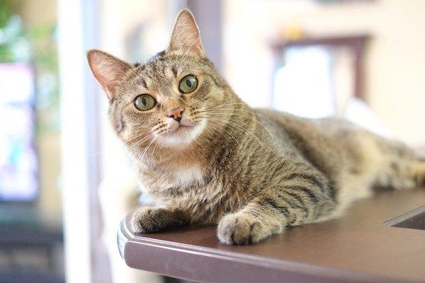 猫が覚えやすい単語6つ