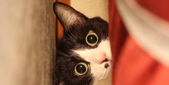 猫はかくれんぼが大好き!隠れてる時の心理4つ