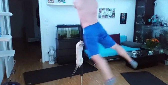 猫ちゃん、飼い主さんと一緒にポールダンス