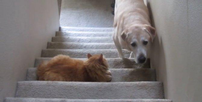 ネコ怖い…階段で怯えるワンちゃん、その先には猫ちゃんが…