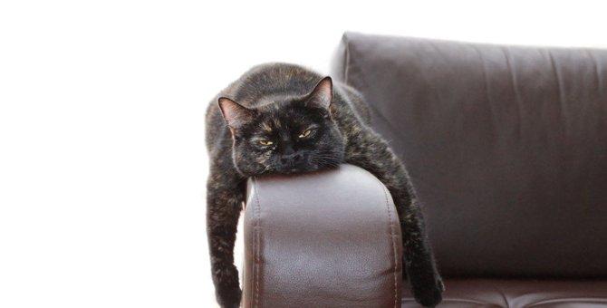 猫にとって『激しいストレス』になる要因3つ!こんな仕草や行動が増えたら危険かも?