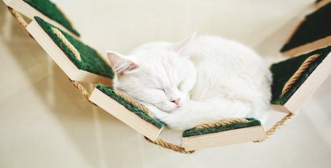 猫と暮らす住まいのリフォーム!その方法と3つの実例