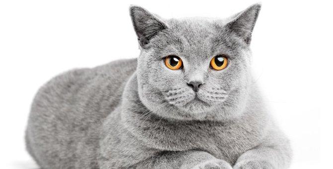 猫のωは「オメガ」!その正式名称や役割まで