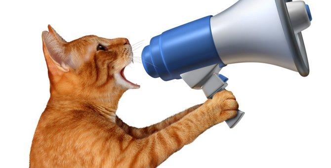 猫がおしゃべりな時の気持ちと対処法