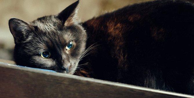 猫が実は落ち込んでいるときの行動5つ