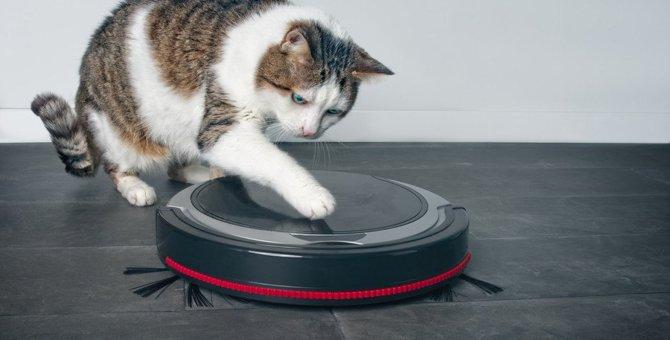『猫が嫌いなもの』ランキングワースト3!天敵はやっぱりコレだった…!