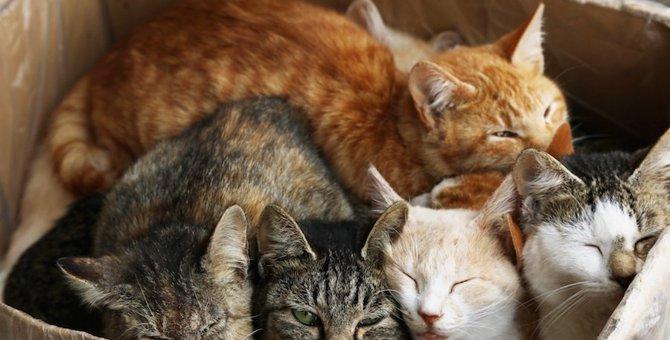 野良猫の寝床はどんな所?冬の寒さ対策