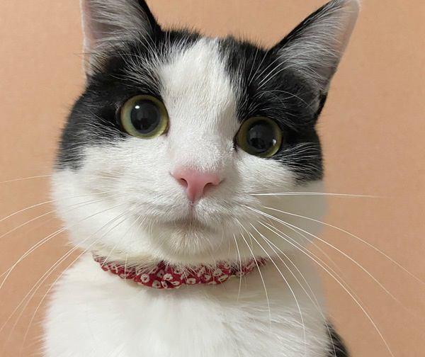 猫に首輪って必要?気をつけるべきこと3つ