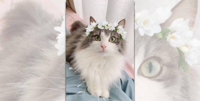 「幸せになります♡」花冠がお似合いの清楚な猫さんに6万人が悶絶!