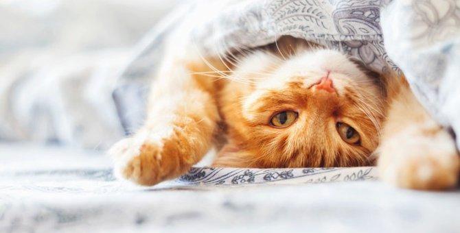 猫はもやしを食べても大丈夫?安全な与え方
