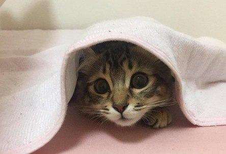 『人見知りな猫』の特徴4つ