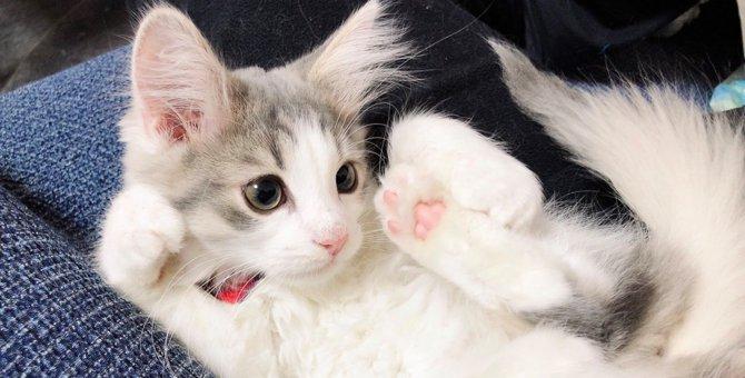 労災認定?新入社員猫の劇的ビフォーアフターに激務を心配する声続々