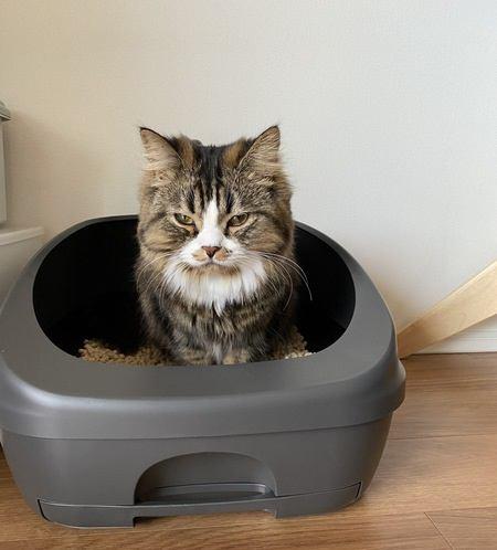 猫トイレのサイズや砂は最適?見極めポイント4つ