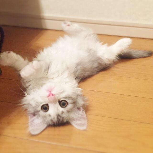 大人気の男性保育士「てぃ先生」の愛猫が可愛すぎると話題!名前や種類は?