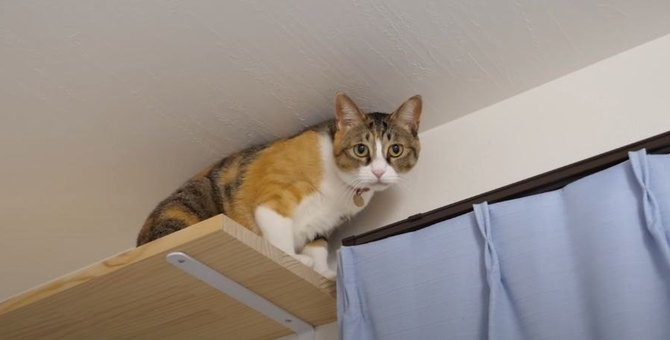 獲物を見失った猫ちゃんがうにゃうにゃ言っていて可愛い♡