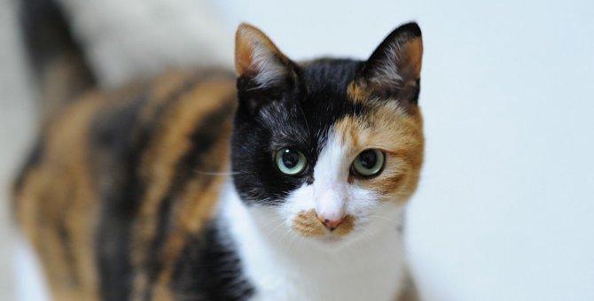 南極へ行った猫『タケシ』は幸運のオスの三毛猫だった