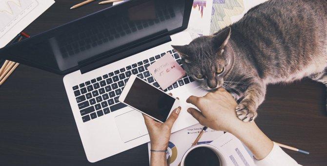 猫が飼い主にしがちな『アピール』3つと対処法