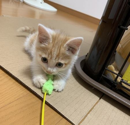 【生活の参考に】猫が好きな色、苦手な色