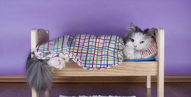 猫の寝袋の特徴や使い方とおすすめの商品3選