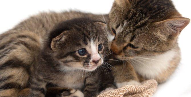 猫が親離れするのはいつぐらい?生まれたての子猫を育てる方法
