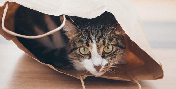 猫が『好きな音』4選