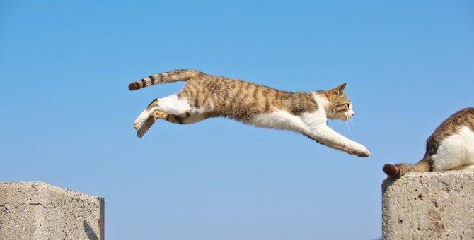 猫の身体能力が凄い!犬、人との違い