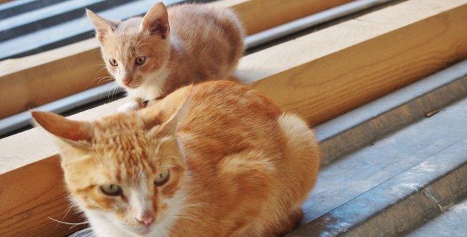 猫の避妊手術におけるメリットとデメリットについて