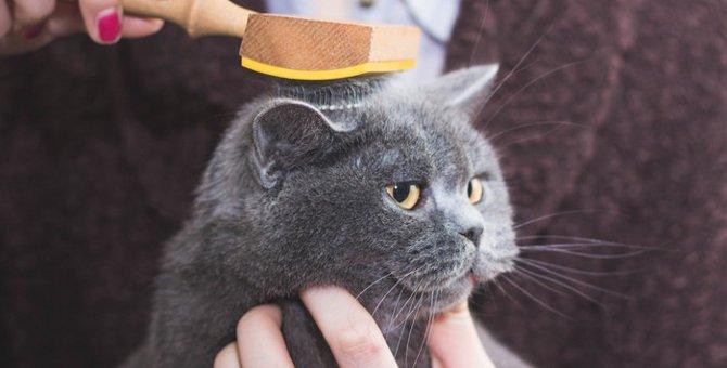 毛が抜けにくい猫6選