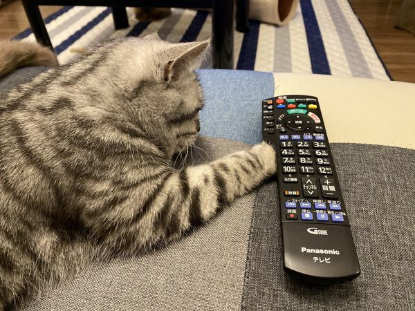 猫が優先しがちな『飼い主より大事なこと』5選