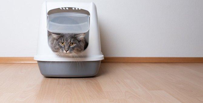 猫の不調サインかも?危険な『排泄時の行動』3つと対処法