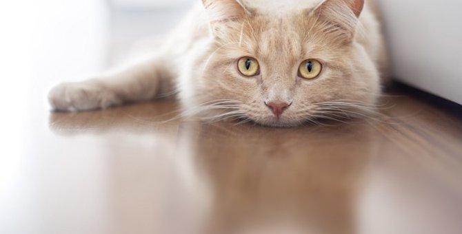 猫がげっぷをする理由と病気の兆候