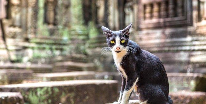 インドに猫がいない3つの理由