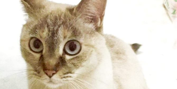 工事現場で職人さんから託された子猫。今では大切な相棒に♡