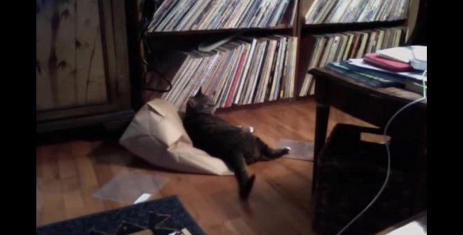 「出してくれ~!」袋で遊んでた猫を閉じ込める猫ちゃん