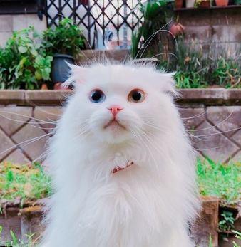 亡くなった愛猫に会いたい…猫は生まれ変わりをするのか?