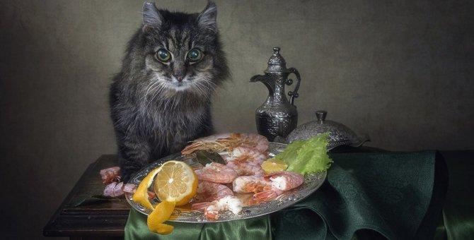 猫に与えてはいけない魚介類5つ