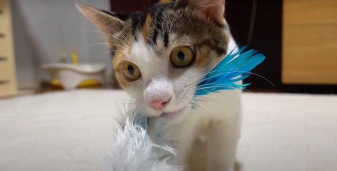 おもちゃに大興奮!猛獣と化した子猫ちゃん!